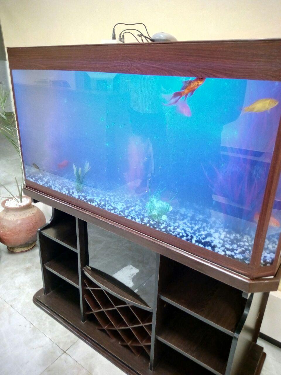 Large Cabinet Aquarium